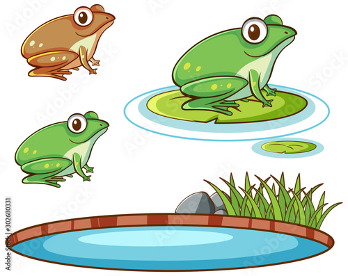 Isolated picture of frogs and pond