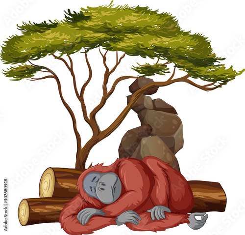 Foto op Plexiglas Kids Isolated picture of gorilla sleeping