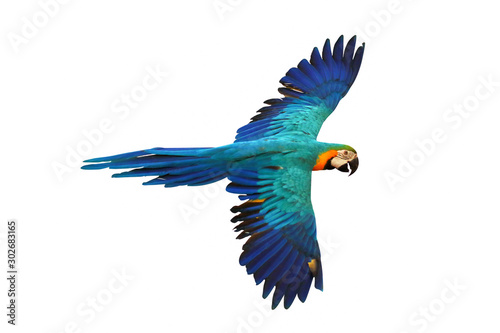 Photo  Blue and gold macaw parrot isolated on white