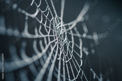 Aluminium Prints Macro photography spider web with water drops