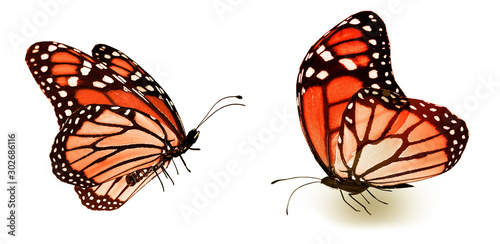 Obraz na plátně  Color butterflies , isolated on white background