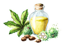 Castor Oil Bottle With Green Castor Fruits, Beans, Leaf And Seeds. Watercolor Hand Drawn Illustration Isolated On White Background