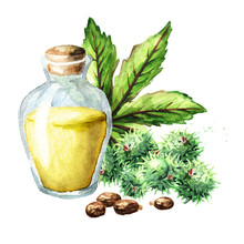Castor Oil Bottle With Green Castor Fruits, Beans, Leaf And Seeds. Watercolor Hand Drawn Illustration, Isolated On White Background