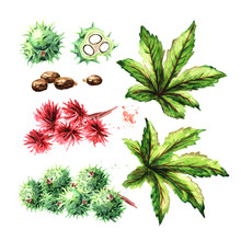Castor Oil Plant, Ricinus Communis. Brunch With Green Beans, Flowers And Leaves Set. Watercolor Hand Drawn Illustration, Isolated On White Background