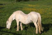 Pferd Mit Rückenleiden