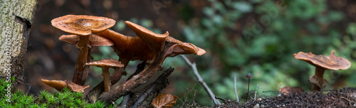 Photo fungus on green moss during autumn