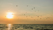 canvas print picture - birds over the sea at sunset