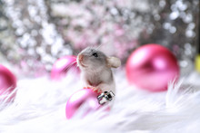 Little Rat And New Year Decorations
