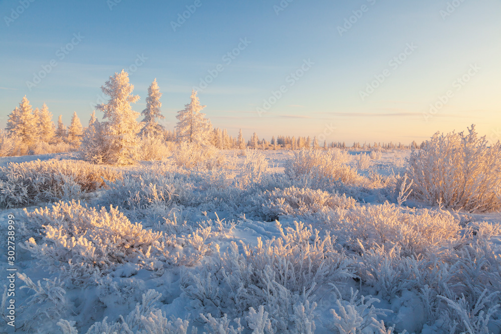 Fototapety, obrazy:  Beautiful winter landscape of tundra , frost on the branches of trees, the first snow, Arctic Circle.