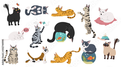 Obraz Cartoon cat characters collection. Different cat`s poses, yoga and emotions set. Flat color simple style design. - fototapety do salonu
