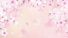 Blossoming Light Pink Sakura F...