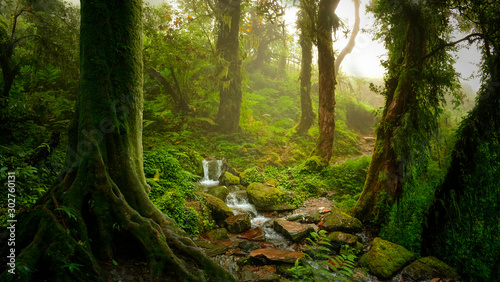 Fototapety, obrazy: Deep tropical jungles of Southeast Asia in august