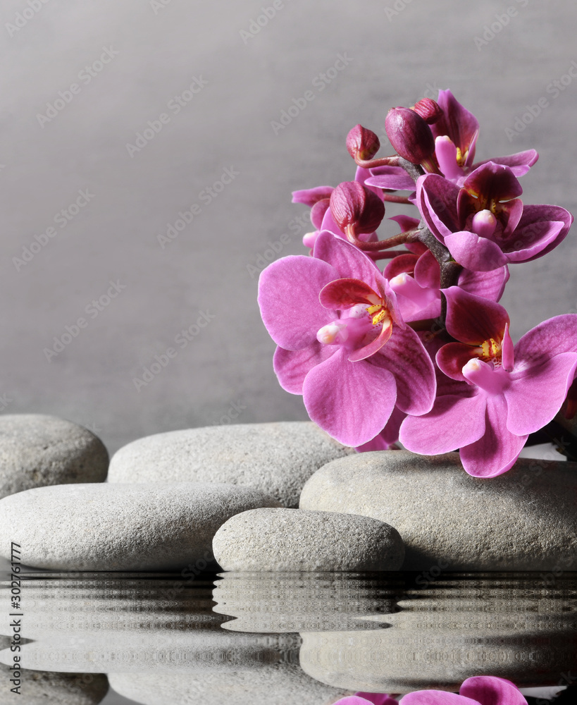 Fototapety, obrazy: Composition with spa stones, orchid pink flower on grey background.