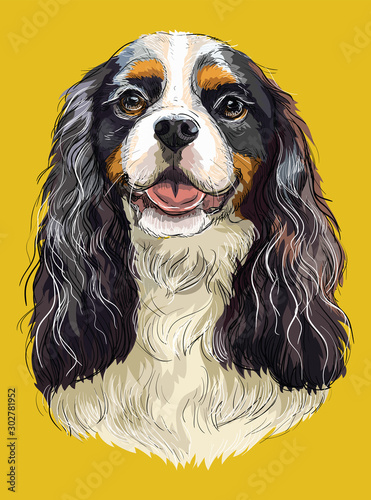 Photo Cavalier King Charles Spaniel colorful vector hand drawing portrait