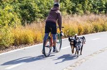 Man Rides Bike On Paved Trail ...
