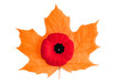 Poppy flower a Canadian symbol for Remembrance day