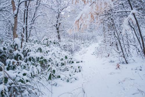 Photo 雪の森