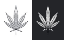 Hand Drawn Marijuana Leaf. Detailed Sketch Of Cannabis Leaves On White And Black Background. Vector Illustration