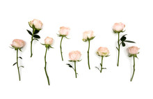 White Pink Rose Flowers Stems ...