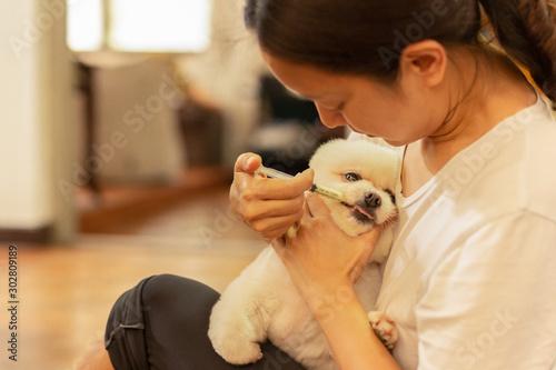 Carta da parati  Woman giving medicine to white pomeranian dog with syringe at home