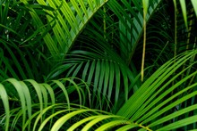 Green Leaves Pattern,leaf Palm Tree In The Forest