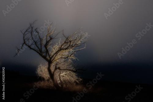 Obraz Single bare tree in the middle of a field with the fog in the background - loneliness concept - fototapety do salonu