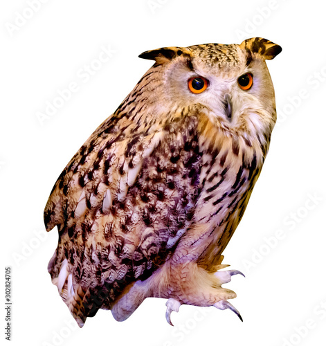 owl isolated on white background Wallpaper Mural