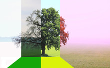 Abstract Image Of Lonely Tree ...