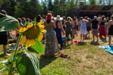 Selective Focus On Sunflower - Helianthus, Diverse People Enjoy Spiritual Gathering Celebration In The Background