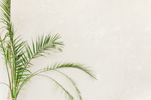 Tropical Palm In Home In Flowerpot On White Background. Modern Minimalistic Interior With An Home Plant. Flat Lay, Top View Minimal Concept.