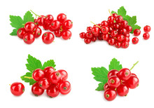 Red Currant Berries With Leaf Isolated On White Background. Set Or Collection