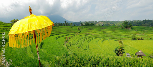 Door stickers Rice fields View of green rice field in terrace in Bali,near jatiluwih with yellow umbrella - Indonesia