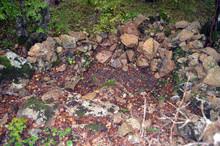 Overgrown Remnants Of Ancient ...