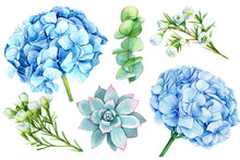 Set Of Blue Flowers, Hydrangea...