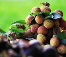 Fresch Lichi Fruits From Africa