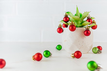 Succulent Plant Decorated With Christmas Red And Green Balls