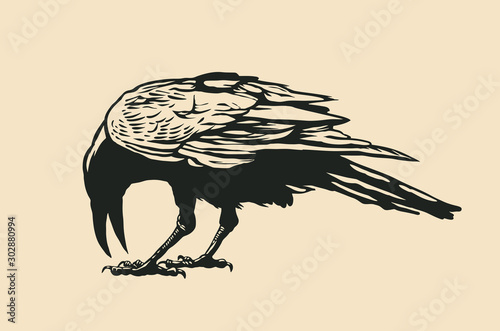 Obraz na plátně  Black Raven. vector illustration