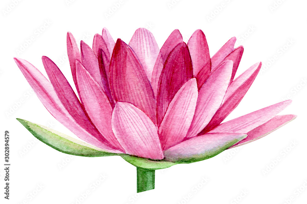 Fototapety, obrazy:  pink lotus flower, watercolor illustration, hand drawing, flora wedding