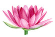 pink lotus flower, watercolor illustration, hand drawing, flora wedding