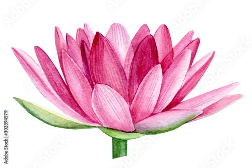 pink lotus flower, watercolor illustration, hand drawing, flora wedding - 302894579