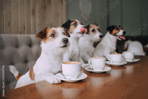 Obraz Four jack russell terriers sitting in front of cups - fototapety do salonu