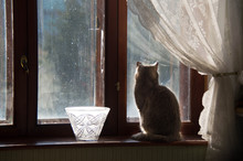 Fluffy Cat Sits On A Window Si...