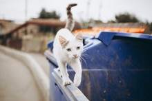 Poor Street Cat In Search Of Food Climbs The Garbage Cans