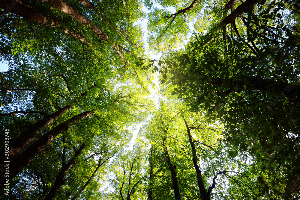 Fototapety, obrazy: Summer landscape. Alley through tall green trees in a city park. Bright sunshine and blue sky. Riga, Latvia