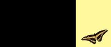 Carte Noire , Papillon Sur Fond Jaune
