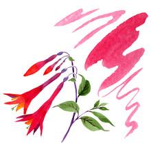 Red Fuchsia Floral Botanical Flowers. Watercolor Background Set. Isolated Fuchsia Illustration Element.