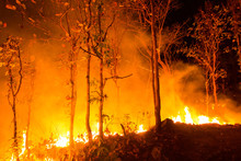 Forest Fire Burning Trees At N...
