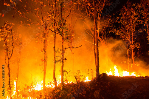 Obraz Forest fire burning trees at night. - fototapety do salonu