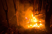 Forest Fire Burning Trees At Night.