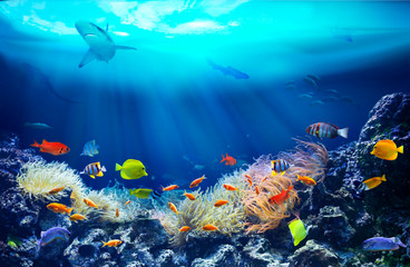 Fototapeta na wymiar Life in a coral reef. Underwater sea world. Colorful tropical fish. Ecosystem.